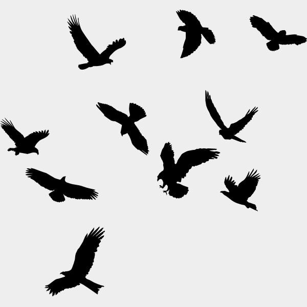 raamstickers-raamvogels